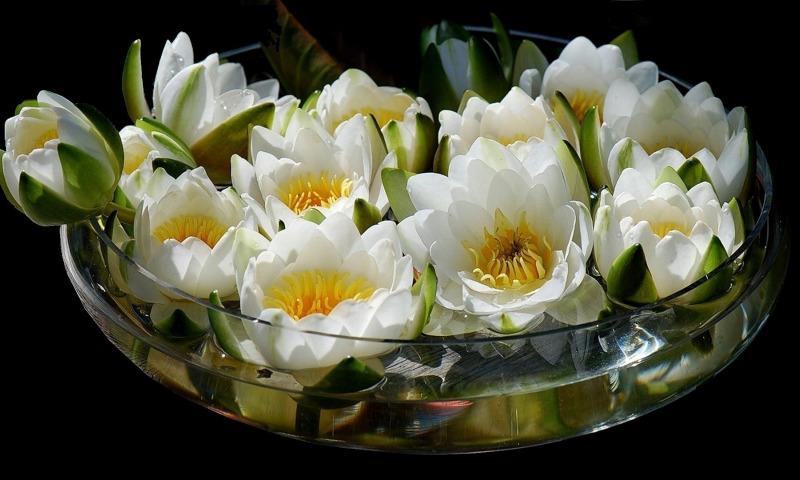http://img2.goodfon.ru/original/800x480/8/c8/buket-cvety-lotos-vaza-voda.jpg