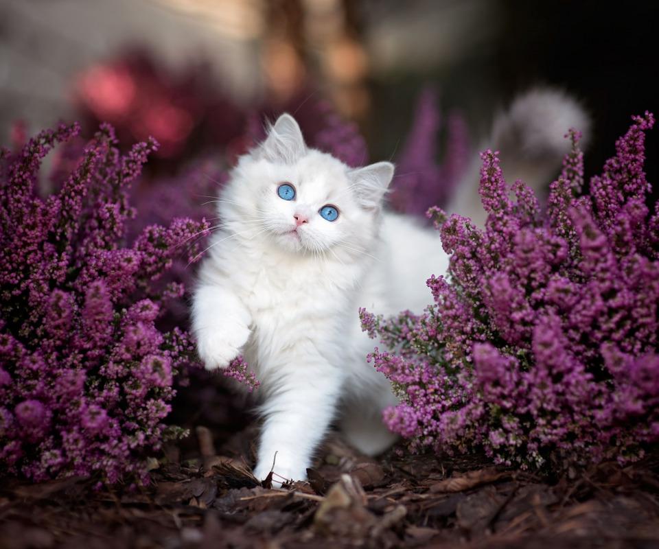 Открытки с белыми кошками, открытка днем