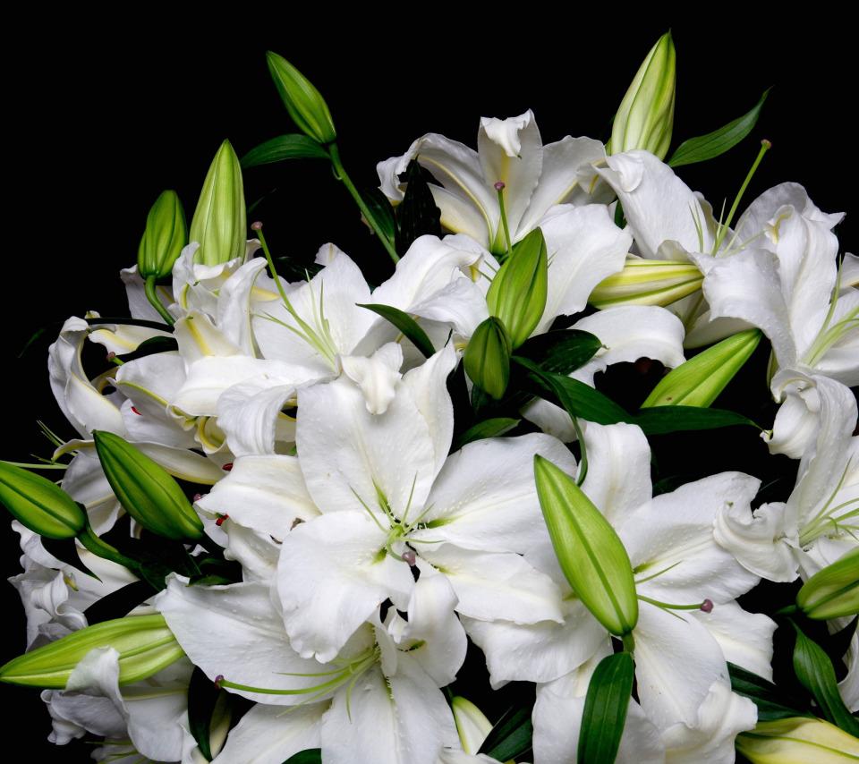 букеты лилии яркие фото сегодняшний