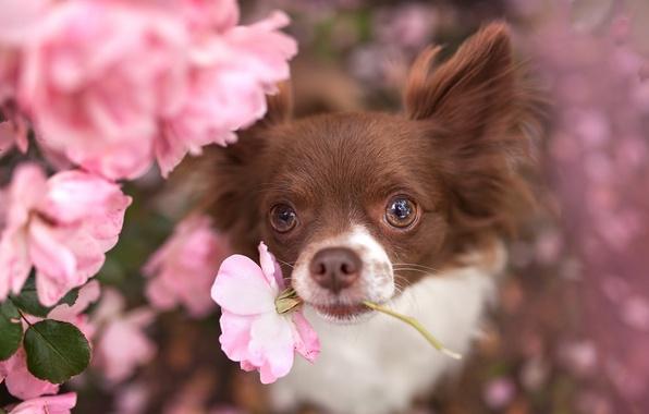Картинка цветок, взгляд, друг, собака