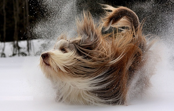 Картинка зима, снег, движение, собака, прогулка