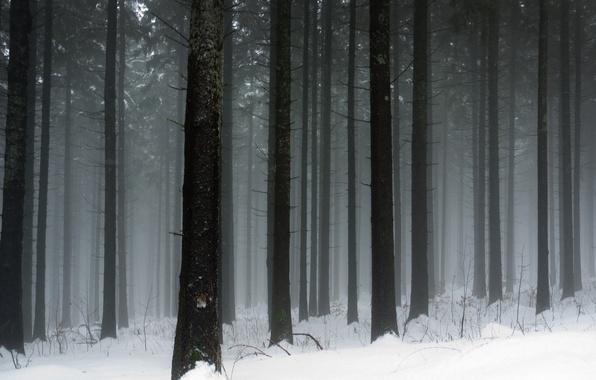 Фото зимняя природа зима снег мороз