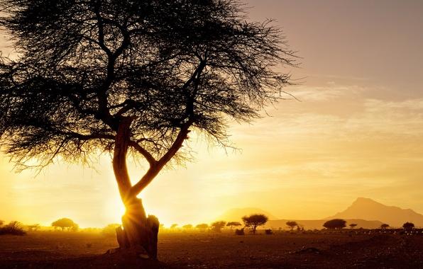 Картинка пейзаж, закат, дерево