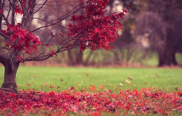 Картинка осень, трава, листья, природа, дерево, красные