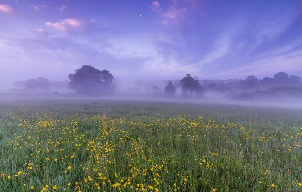 Картинка поле, небо, облака, деревья, цветы, туман, рассвет, луна, поляна, Англия, утро, Великобритания, дымка