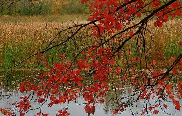 Картинка осень, лес, листья, пруд, ветка, багрянец