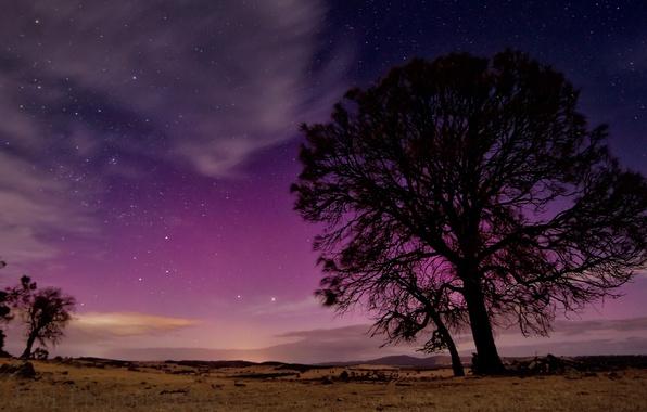 Картинка небо, звезды, ночь, природа, дерево, силуэт