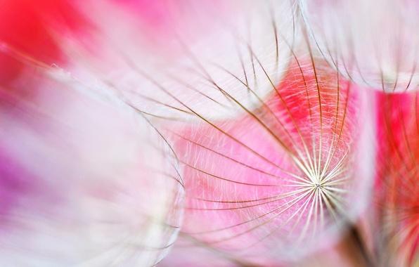 Картинка цветок, свет, природа, обои, растение, паутина