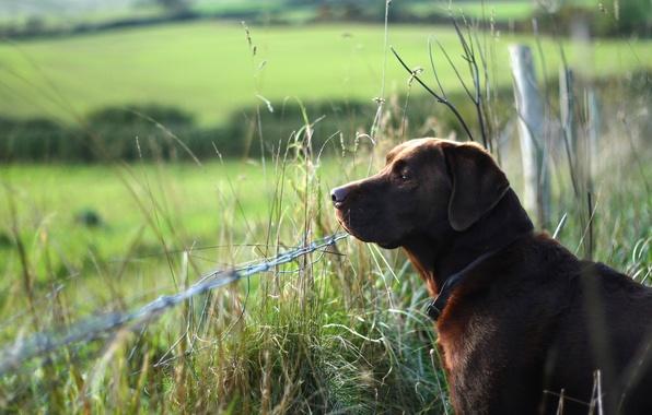 Картинка друг, забор, собака