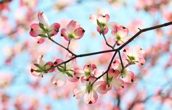 Картинка небо, цветы, ветка, весна, лепестки, сад
