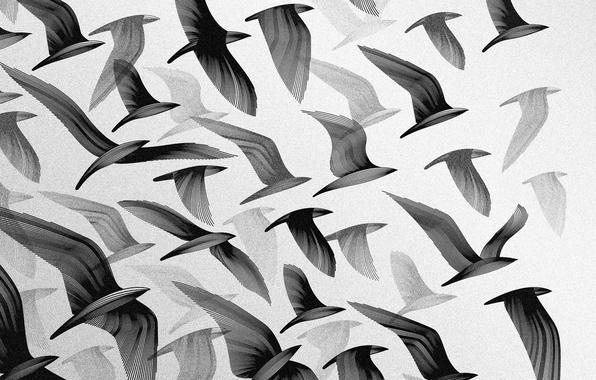 Картинка небо, полет, птицы, обои, крылья, стая