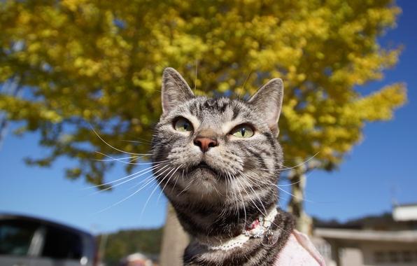 Фото обои усы, кошак, глаза, кот