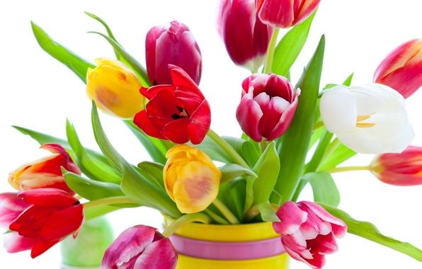 Картинка цветы, яркие, красота, букет, лепестки, тюльпаны, красные, ваза, red, розовые, white, белые, разноцветные, yellow, pink, …