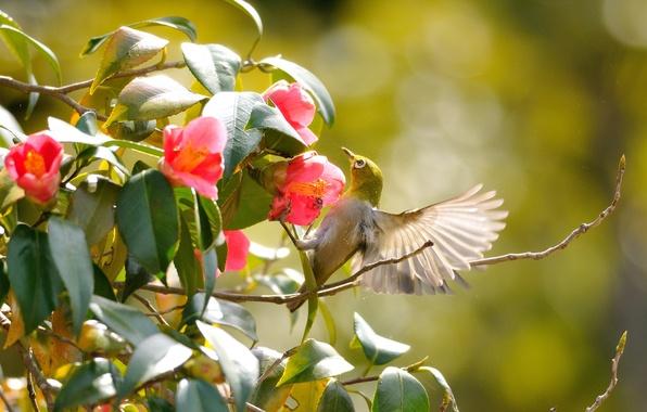 Картинка зелень, листья, цветы, ветки, птица, крылья, полёт
