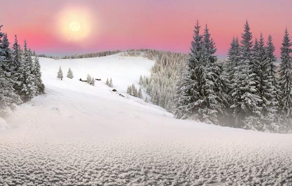Картинка Солнце, Природа, Зима, Снег, Ель, Украина, Карпаты, Закарпатье