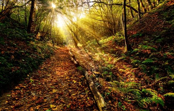 Картинка осень, лес, небо, трава, листья, солнце, облака, лучи, пейзаж, закат, природа, пути, цвет, grass, forest, …