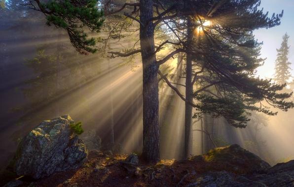 Картинка лес, лучи, свет, деревья, природа, камни, утро, солнца