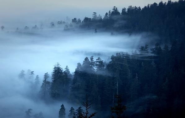 Картинка лес, деревья, туман, Калифорния, США, Редвуд