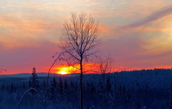 Картинка зима, лес, небо, закат, дерево, зарево