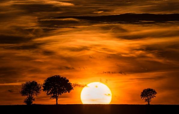 Картинка небо, солнце, облака, деревья, закат, силуэт