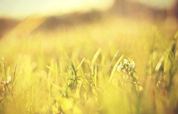 Картинка зелень, цветок, трава, солнце, макро, цветы, зеленый, фон, розовый, widescreen, обои, лепестки, луг, wallpaper, flower, …
