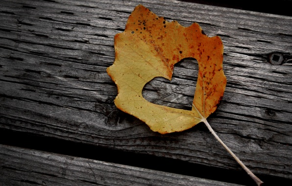 Картинка осень, листья, креатив, дерево, настроение, листва, сердце, листок, сердца, бревно, листочек, древесина, сердечко, листки, гвоздь, ...