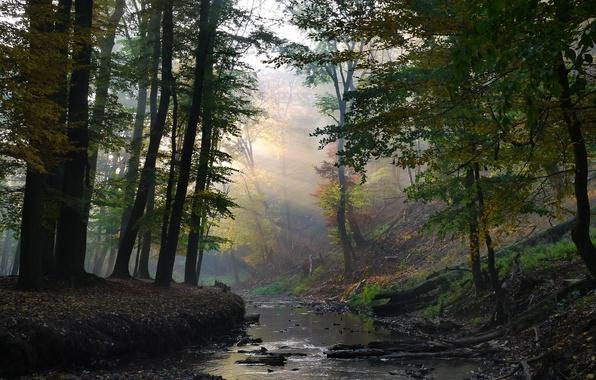 Картинка лес, лучи, ручей, солнечные