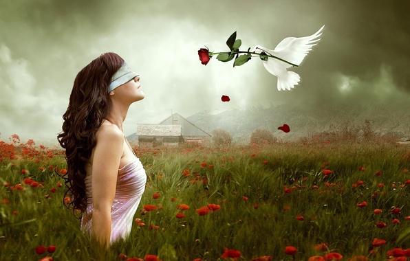 Картинка цветок, природа, фон, обои, настроения, роза, голубь, повязка, девушка. брюнетка