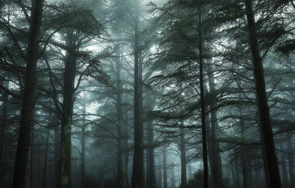 Картинка зелень, лес, деревья, туман, Франция, мох, Nikon, дымка, Green, Tree, France, Mist, Прованс, Fog, Mood, …