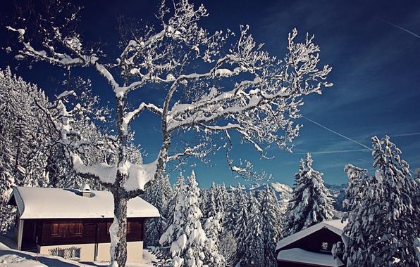 Картинка зима, снег, деревья, природа, Швейцария, ели, домики, Switzerland