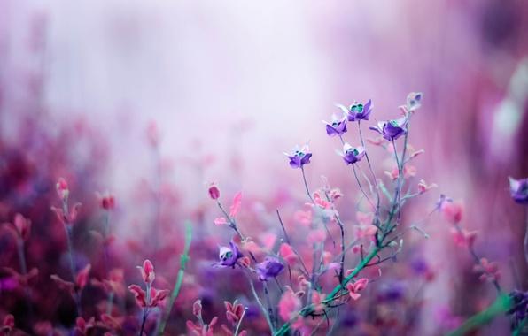 Картинка макро, природа, Цветы, розовые, полевые, сиреневые, боке