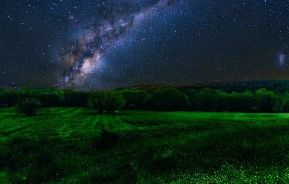 Картинка поле, лес, звезды, деревья, ночь, млечный путь