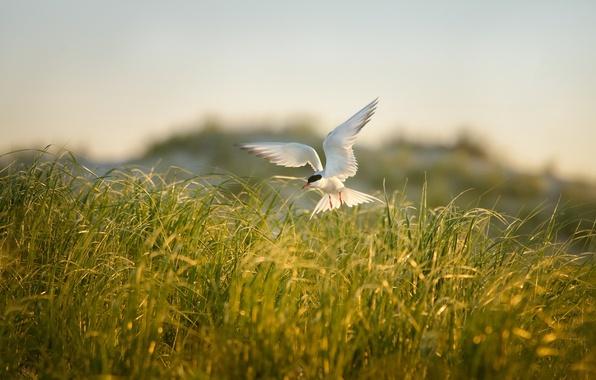 Картинка поле, лето, трава, природа, птица