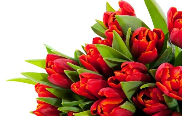 Картинка листья, цветы, стебли, яркие, красота, лепестки, тюльпаны, красные, red, flowers, beauty, petals, bouquet, bright, Tulips