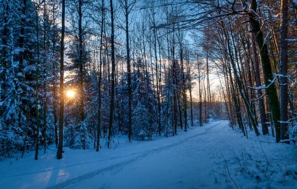 Картинка зима, лес, солнце, лучи, снег, деревья, закат, следы, парк, вечер, дорожка, тропинка