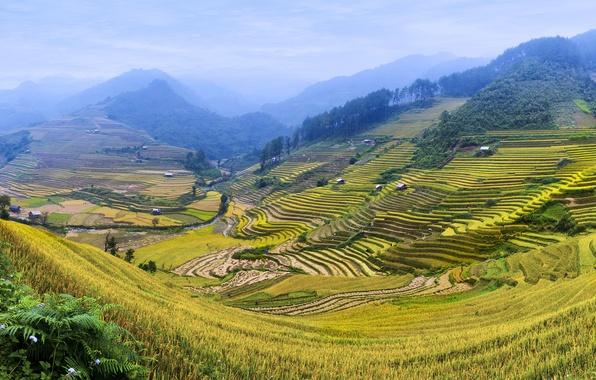 Картинка зелень, горы, холмы, поля, долина, плантации