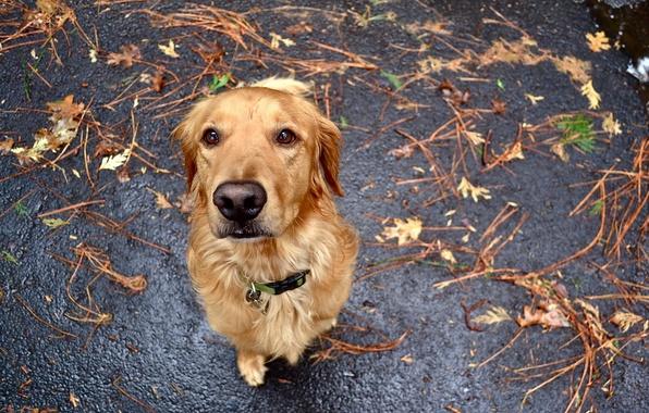 Картинка взгляд, друг, преданность, собака