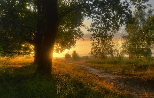 Картинка дорога, трава, солнце, деревья, пейзаж, закат, природа, тропа, вечер, Германия, тропинка, сельская местность, Нижняя Саксония, …