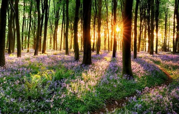 Картинка дорога, лес, трава, деревья, закат, цветы, природа, парк, весна, grass, forest, road, trees, nature, sunset, …