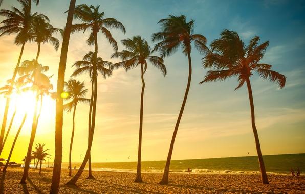 Картинка песок, море, пляж, лето, небо, солнце, радость, природа, пальмы, люди, настроение, океан, отдых, пейзажи, отпуск, ...