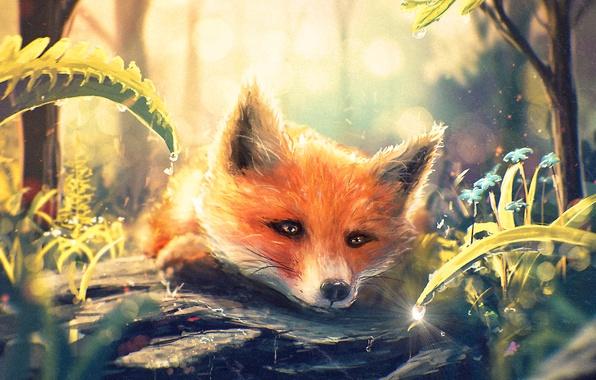 Картинка лес, трава, капля, арт, мордочка, лиса, лис, fox