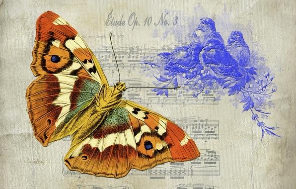 Картинка фон, бабочка, текстура