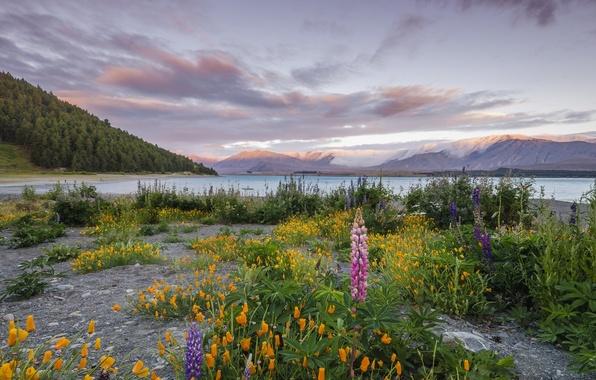 Картинка небо, трава, облака, цветы, горы, озеро