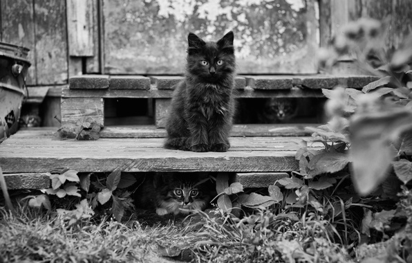 Картинка листья, кошки, коты, котята, leaves, cats, bossy cat, kittens