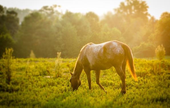 Картинка зелень, животные, трава, листья, солнце, деревья, дерево, конь, widescreen, обои, листва, лошадь, луг, wallpaper, листочки, …