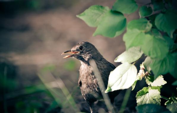 Фото обои птица, лес, зелень, дивноморское