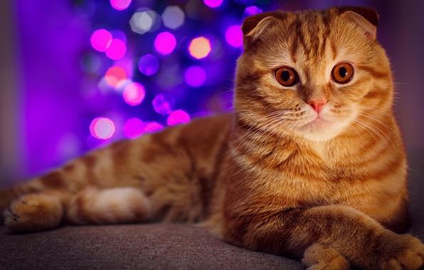 картинки на рабочий стол коты № 520244 бесплатно