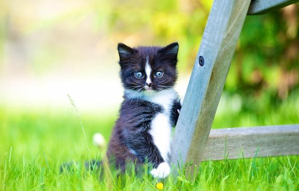 Картинка трава, взгляд, малыш, котёнок, боке