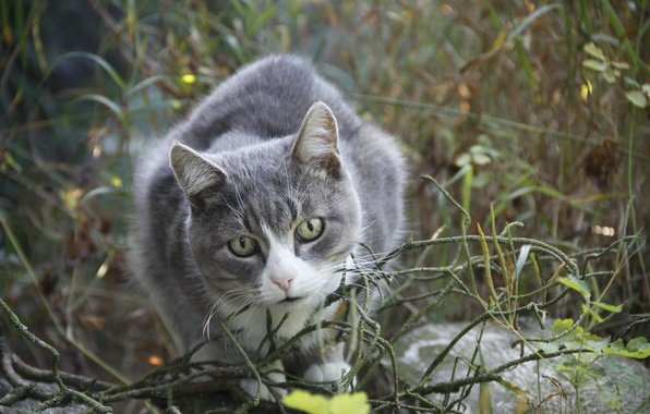 Картинка кошка, лето, кот, взгляд, фон, животное, обои, деревня, прогулка, Животные