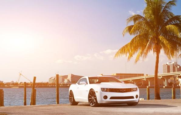 Картинка белый, небо, мост, город, пальма, побережье, Chevrolet, Camaro, white, шевроле, мускул кар, небоскрёбы, передняя часть, …